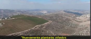 Cristianos cosechan la tierra de Israel - ¡Una llamada a las naciones!