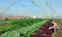 """Israel: """"Tenemos la tecnología para revivir los desiertos en el mundo"""""""