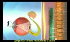 Israel: Una Nano Retina artificial para recuperar la visión