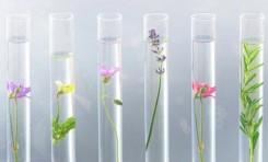 ¿Puede el aroma a cannabis curarnos de enfermedades? - Por Israel 21C
