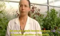 Universidad Hebrea: decubrimos cómo fortalecer la fragancia de las flores
